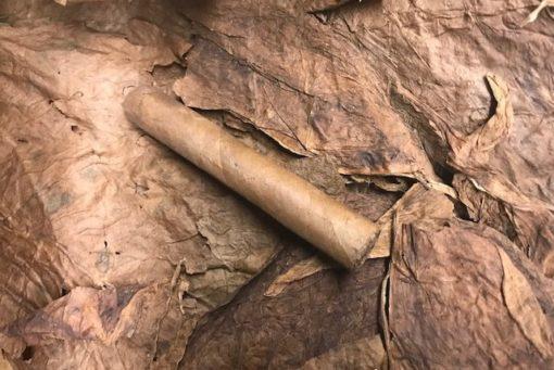Nino Maduro Cigar